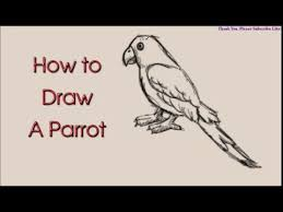 how to draw a parrot drawing easy sketching youtube