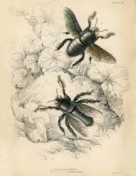 natural history printable bees the graphics fairy