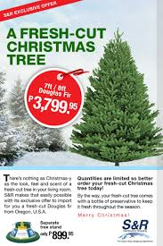 have a real fir christmas tree only p3 799 95 at s u0026r barat ako