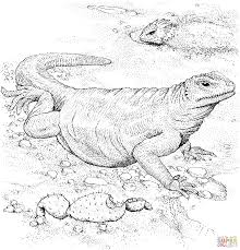 komodo dragon coloring free printable coloring pages