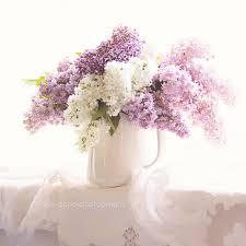 shabby flowers lilac photograph shabby chic decor still floral photography