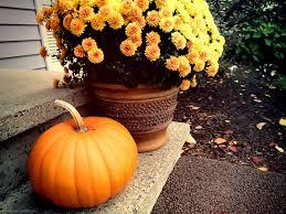 fall pumpkin wallpaper fall yellow mums and pumpkin on the porch widescreen wallpaper