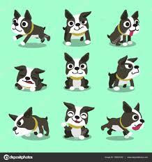 Boston Terrier Flag Cartoon Character Boston Terrier Dog Poses U2014 Stock Vector Jaaak