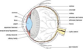Blind Spot In Eyes Eye