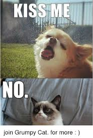 No Meme Grumpy Cat - kiss me no join grumpy cat for more grumpy cat meme on esmemes com