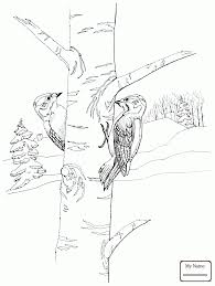 coloring pages for kids birds gila woodpecker coloring7 com