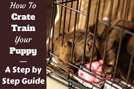 how to crate train a puppy day night even if you work
