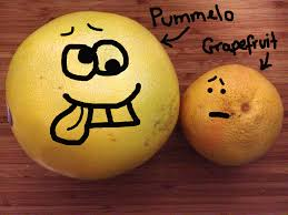 Beaner Pummelo Vs Grapefruit Thoughts From The Beaner