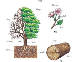 tree noun definition pictures pronunciation and usage notes