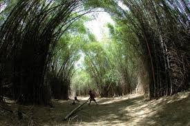 forest images Bamboo not a tree parliament passes bill amending forest act