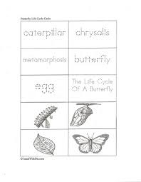 109 best the hungry caterpillar butterflies images on pinterest