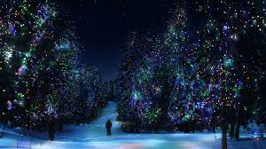 forest christmas tree winter year decoration light hd wallpaper
