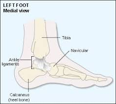 Lateral Collateral Ligament Ankle Best 25 Ankle Ligament Tear Ideas On Pinterest Sprained Ankle