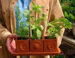 Herb Garden Winter - fresh herb gardening in winter msu extension