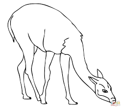 guanaco on pasture coloring page free printable coloring pages