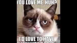 Kitty Meme Generator - 50 cute cat pictures