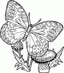 detailed butterfly in garden more pages to color