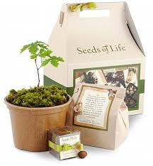 condolence gift seeds of oak tree kit home decor a tree growing kit