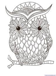 just color owl coloring printables owl