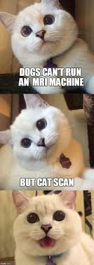Bad Time Meme Generator - 15 purrsome cat breeds that behave like dogs the catdogs cat