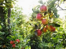13 fun apple orchards near minneapolis and st paul
