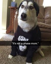 Dog Mom Meme - 27 hilarious memes of dogs wearing hats tail threads