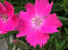 Long Blooming Annual Flowers - long blooming perennial flowers