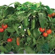 miracle gro aerogarden salsa garden 7 pod seed kit walmart com