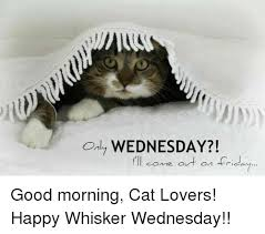 Good Morning Cat Meme - only wednesday i ll come out on friday good morning cat lovers