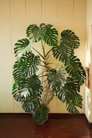 beautiful indoor plants amazing indoor plant ideas 70 indoor plant ideas india living with