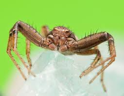 17 Best Images About Spider - 17 best spiders images on pinterest hand spinning spiders and