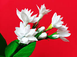 Jasmine Flowers How To Make Paper Flower Mogra Arabian Jasmine Flower 84