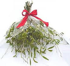 where to buy mistletoe mistletoe buy a bunch of mistletoe