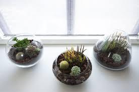 make your own beautiful terrarium u2013 10 inspiring ideas