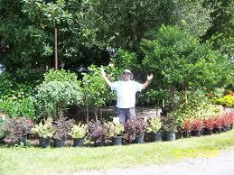 what plants are native to florida florida landscape plants design home ideas pictures homecolors
