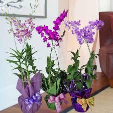 indoor plants singapore singapore florist buy flowers from singapore florists