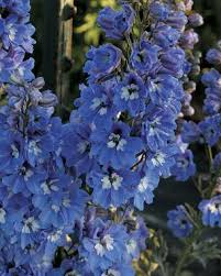 the best flowers for your cutting garden finegardening