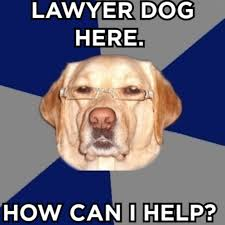 Lawyer Dog Meme - what do air bud a comma a police interrogation have in common