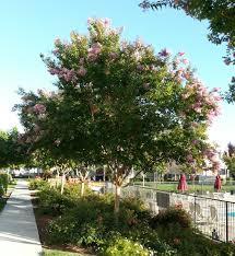 ornamental trees payless hardware rockery nursery