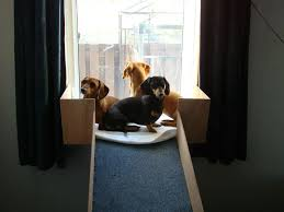 Window Seats For Dogs - andrea fictilis williams a ramp to get them where they can see