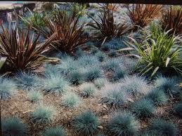ideal desert landscaping plants at home u2014 porch and landscape ideas
