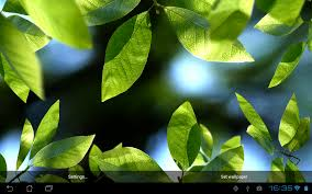 fresh leaves android apps on google play