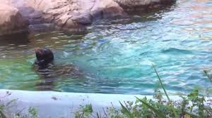 sea lions at the bronx zoo youtube