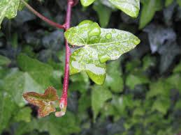 free images tree nature rain flower raindrop wet green