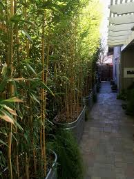 don shor ideas for privacy hedges vines bamboo