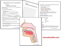 human body activities u2013 digestive system homeschool den
