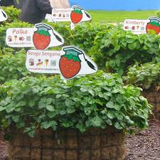 northwest gardening save space and eat fresh with micro farming