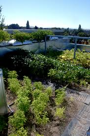 marvellous portland edible rooftop garden with vegetables plants