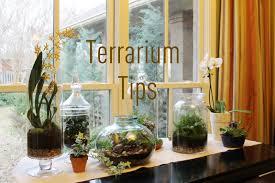 how to start your own terrarium garden