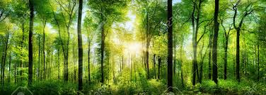 panorama of a scenic forest of fresh green deciduous trees with